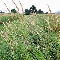 Pelletized grasses can provide a low-tech, renewable heating fuel.