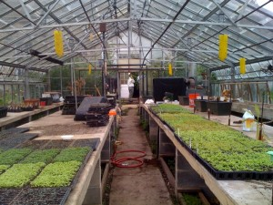 Great Kids Farm Greenhouse