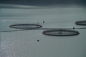 fish farm, Scotland creative commons