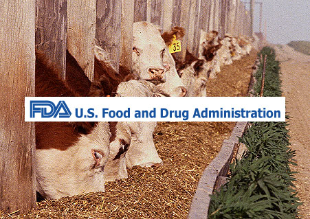 cattle-grazing-usda-copy
