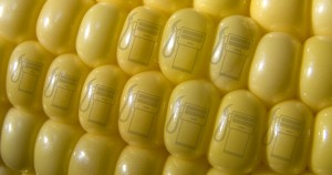 corn-for-ethanol