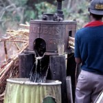Making cane syrup, 1981 / State Archives of Florida