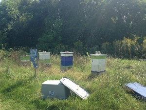 Beekeeping at Real Food Farm / 2014