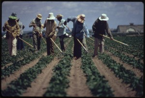 Weeding sugar beets near Ft. Collins, 1972.