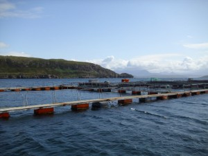 Marine salmon aquaculture in Scotland, U.K.