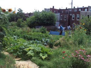 Boone Street Farm: After