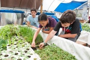 Students exploring the CLF aquaponics facility, where researchers are experimenting with growing insect meal-based feed.