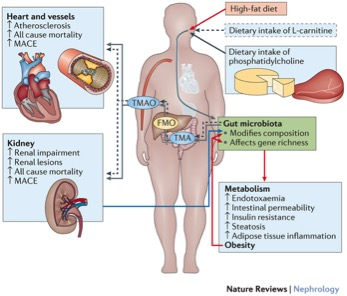 2016-meat-gut-microbiome